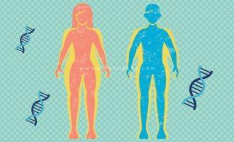 چاقی ارثی و ژنتیکی